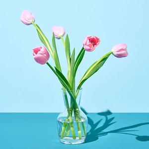 핑크 튤립(5송이)