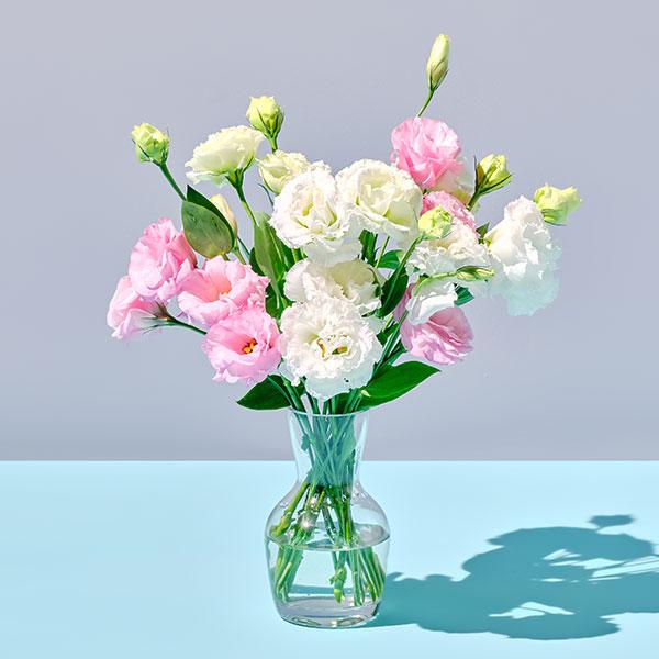 리시안셔스 핑크+화이트(15송이) 대표이미지 섬네일