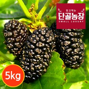[단골농장] 내장산 토종 오디 생과 5kg (급냉) 대표이미지 섬네일