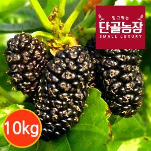 [단골농장] 내장산 토종 오디 생과 10kg (급냉) 대표이미지 섬네일