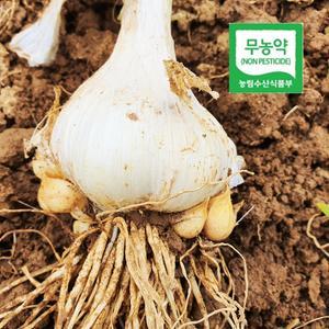 서산 무농약 국내산 마늘 통마늘/쪽마늘 /코끼리마늘 1kg/3kg  대표이미지 섬네일