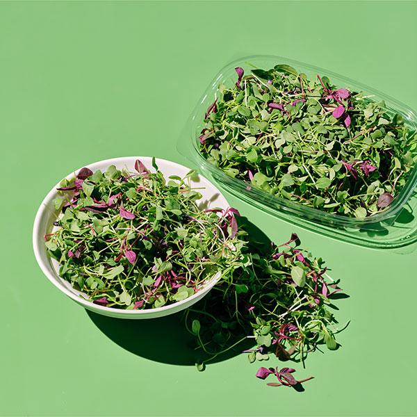 유기농 어린잎 샐러드 (150g) 대표이미지 섬네일