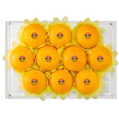 [제주愛귤] 제주직송 고당도 황금향(대과) 선물세트 [3kg/9~12과] 대표이미지 섬네일