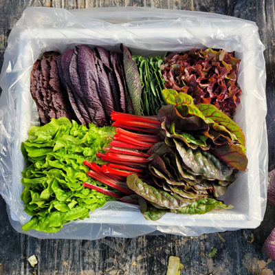 유기농 모듬쌈채소 샐러드 야채 1kg 대표이미지 섬네일