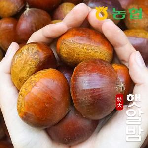 [농협] 토실토실 햇밤 순창 알밤 특대 (1~10kg) (제수용) 대표이미지 섬네일