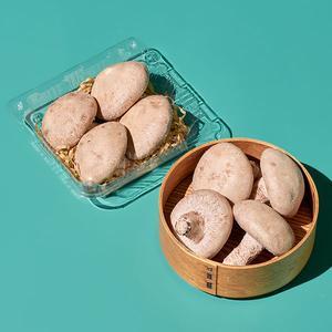 [신규입점] 무농약 하루 표고버섯(120g) 대표이미지 섬네일