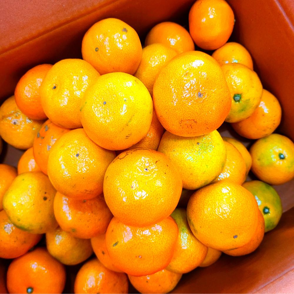 [산지직송] 새콤달콤 감귤 1.5kg/3kg 대표이미지 섬네일