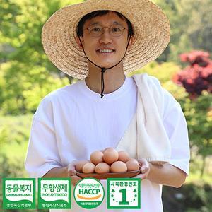 시골다리 자유방목 동물복지 유정란 20구 사육환경번호1번달걀