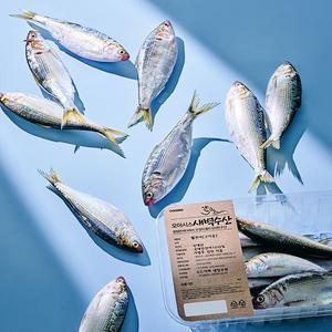 [신규입점]자연산 생물전어(구이용/500g 내외) 대표이미지 섬네일